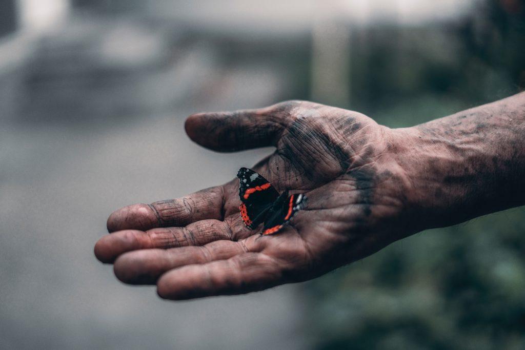 omsorgspligt for sommerfugl
